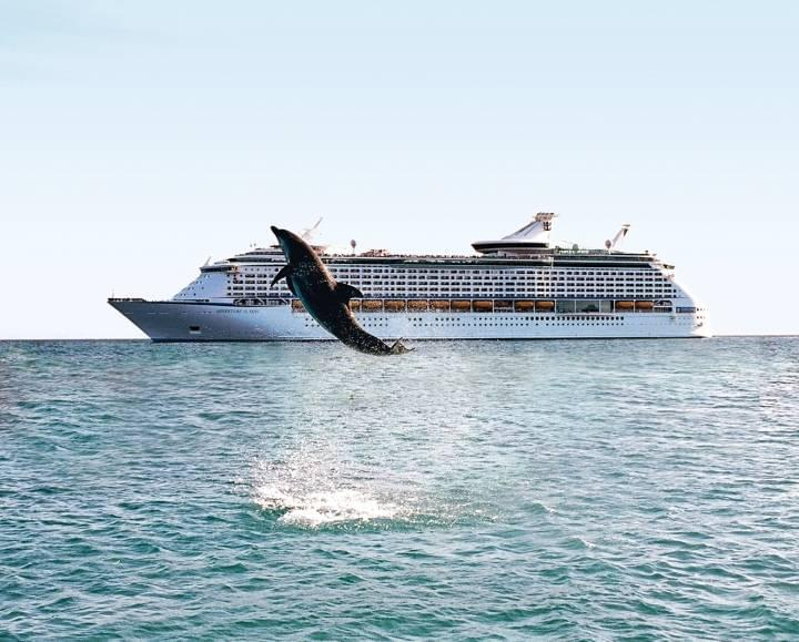 Dolphin sighting on a cruise