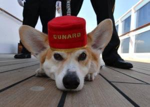 Dog on a cruise ship
